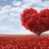 Не следуй за сердцем