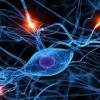 Тайны головного мозга