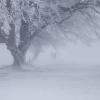 В дни, когда приносят тучи холод зимних вьюг (песня)