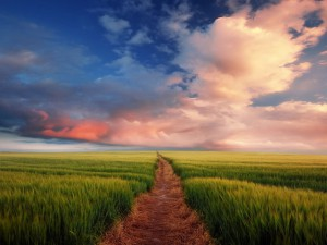 Nature_Fields_Path_through_the_field_025473_29