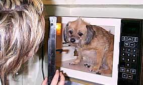dog_microwave
