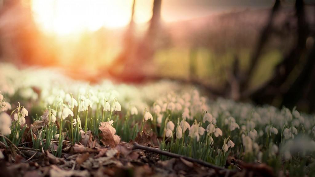 flowers-flower-cvety-cvetochki