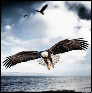 i am free by Joe McCabe